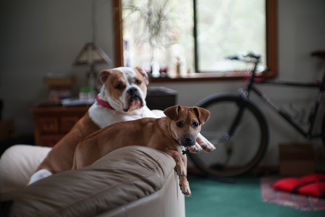 new Sony A7R, around the house…